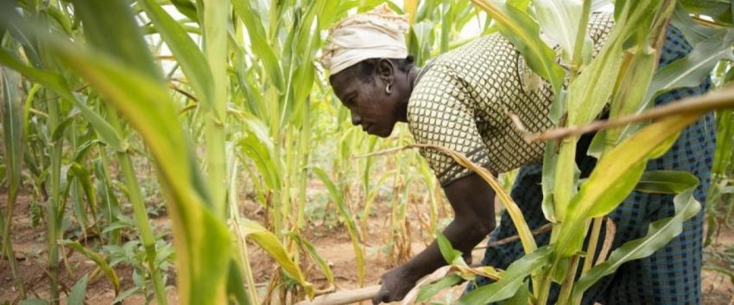 Photograph of woman working in a field.