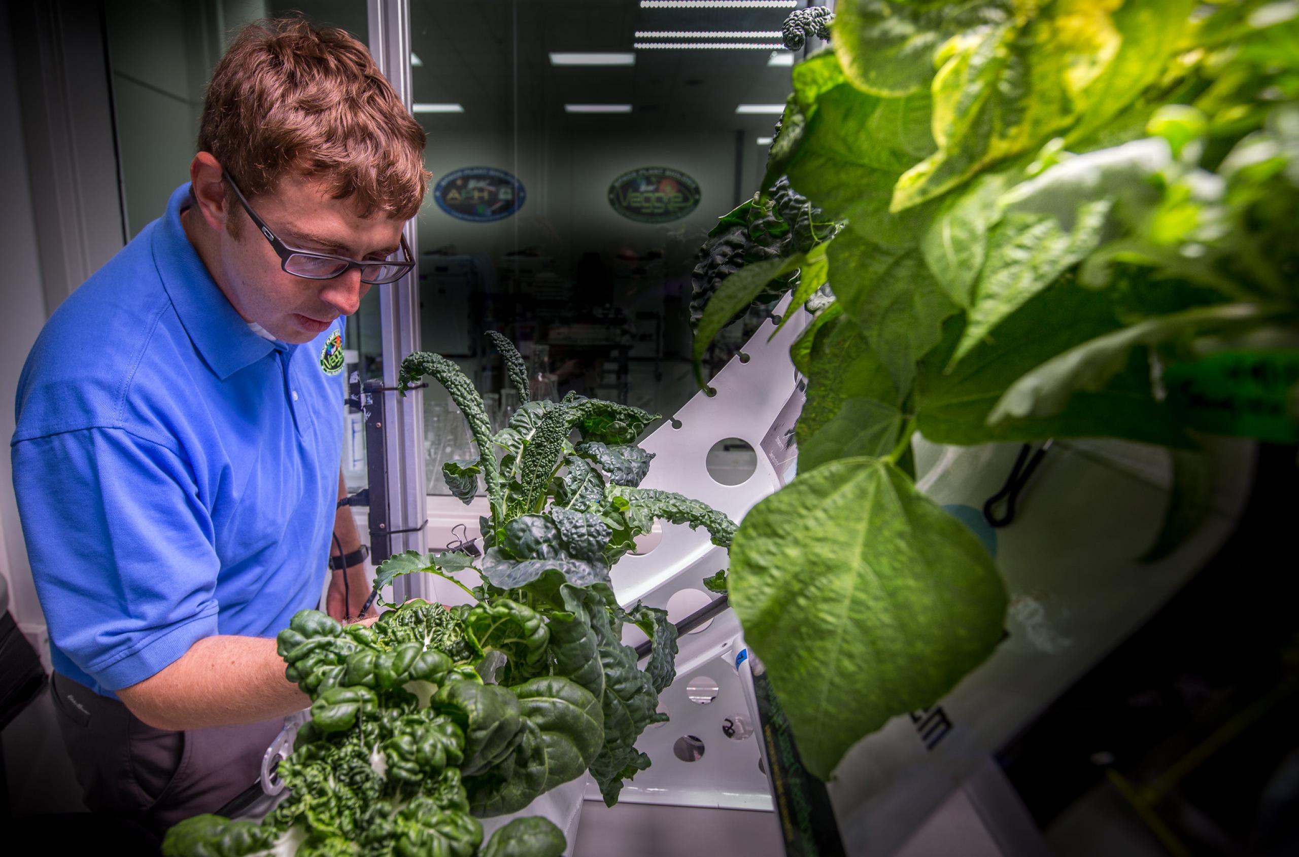 Man tending to vegetation growing in a lab.