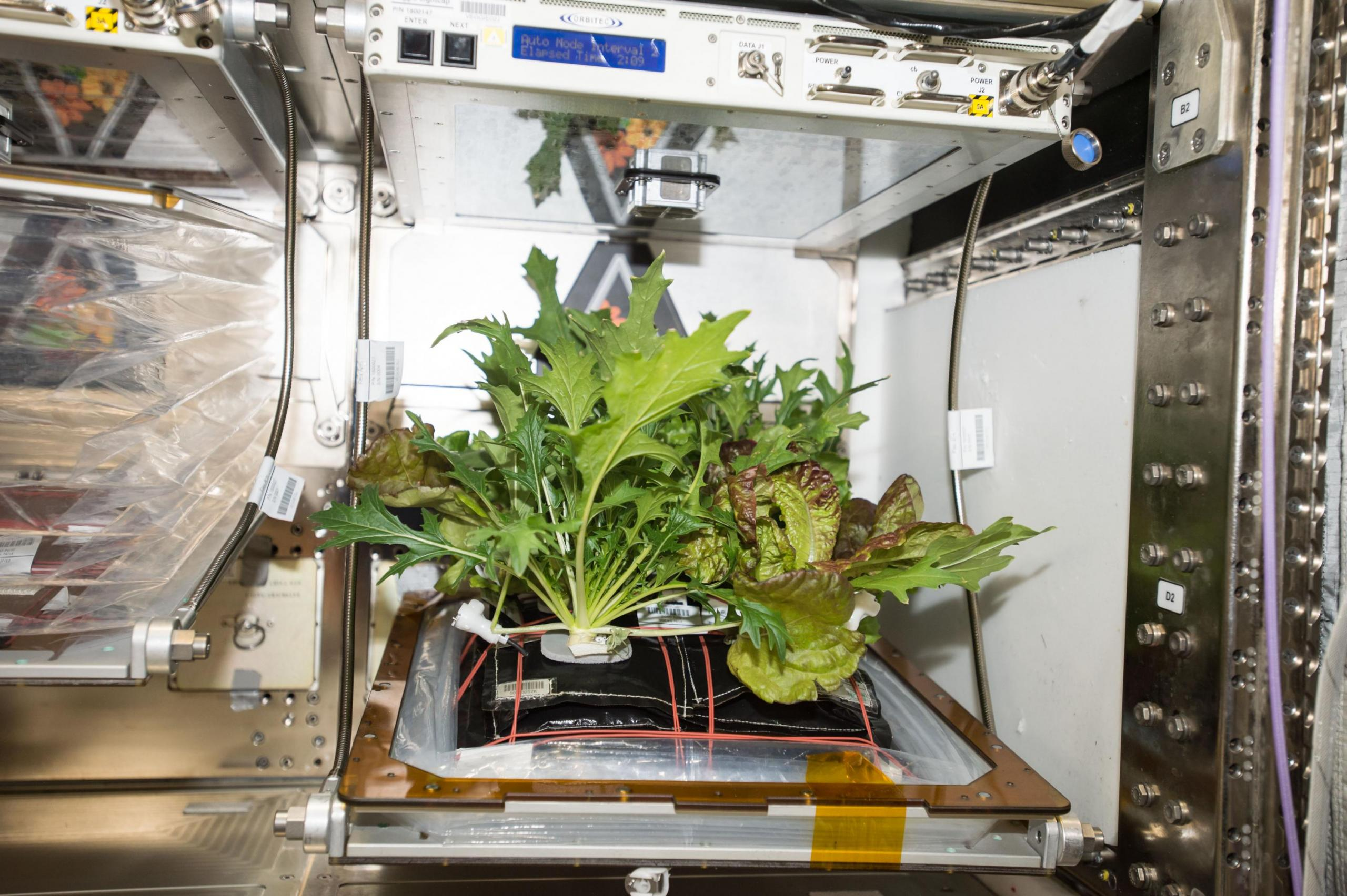 Laboratory chamber with lush green plants growing from a test platform.