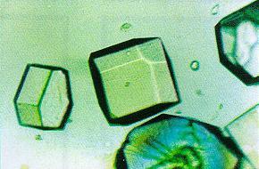 lysozyme.jpg