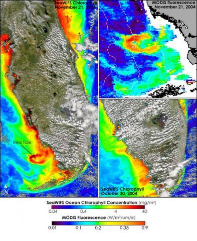 SeaWiFS & MODIS - Ocean Chlorophyll Concentrations