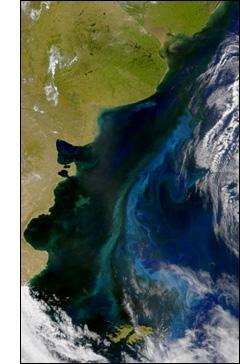 SeaWiFS - Patagonian Shelf Bloom
