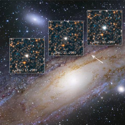Cepheid Variable Star V1
