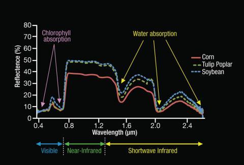 Spectral Signatures of Vegetation