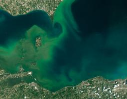 Satellite image of algal blooms