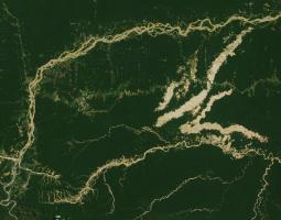 Image of biodiversity in the southeastern region of Peru