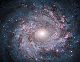 Photo of spiral galaxy NGC 3982