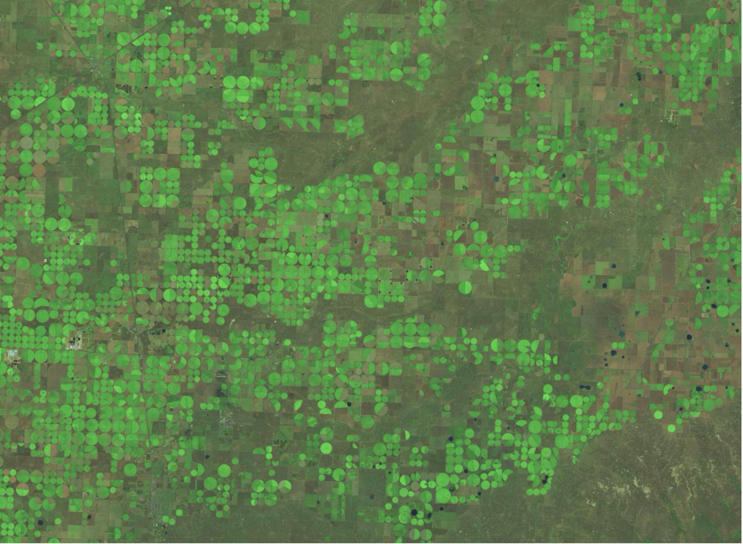Aerial image bright green circles against a background of drab green.