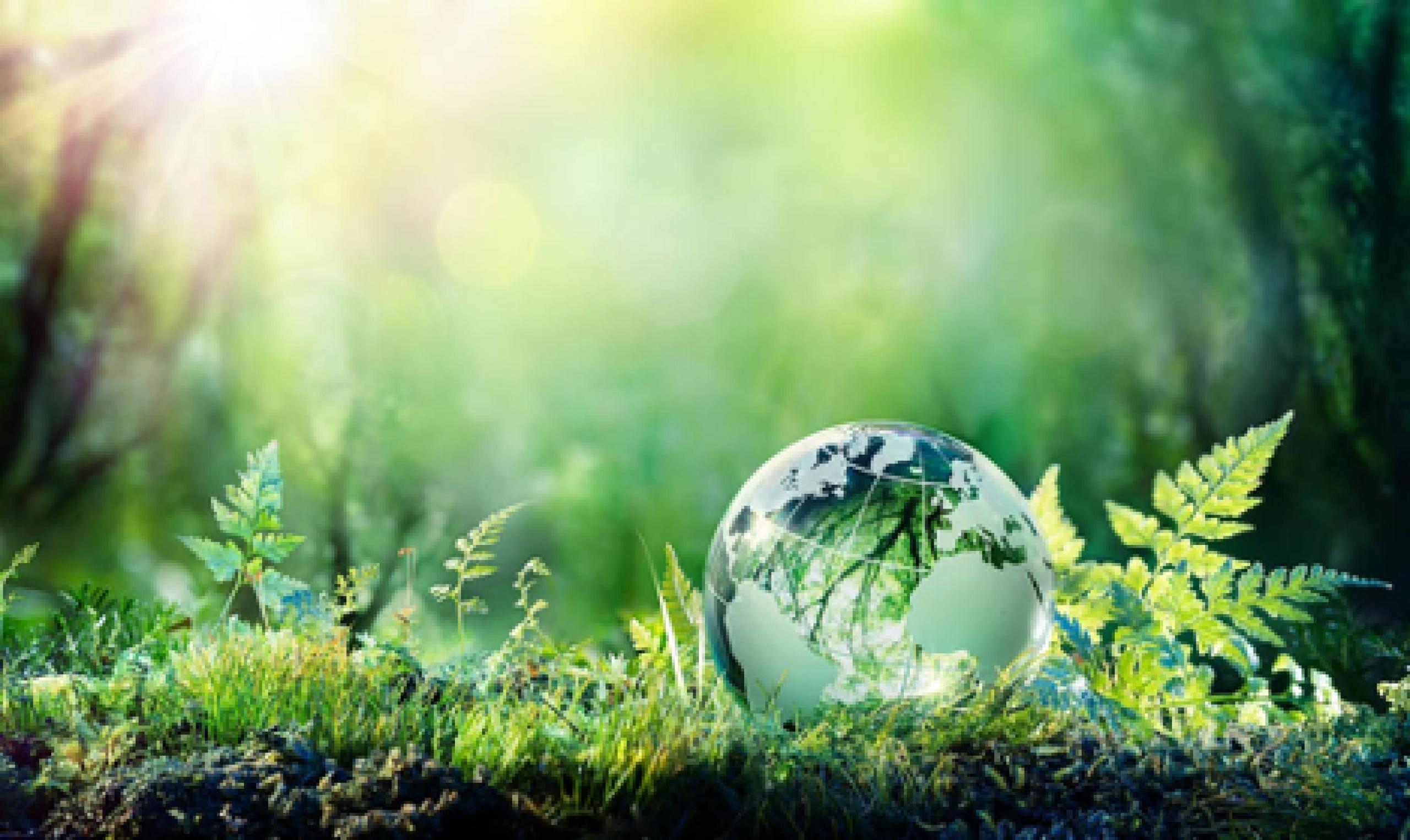 Close up photo of forest floor showing grass, ferns and small green globe.