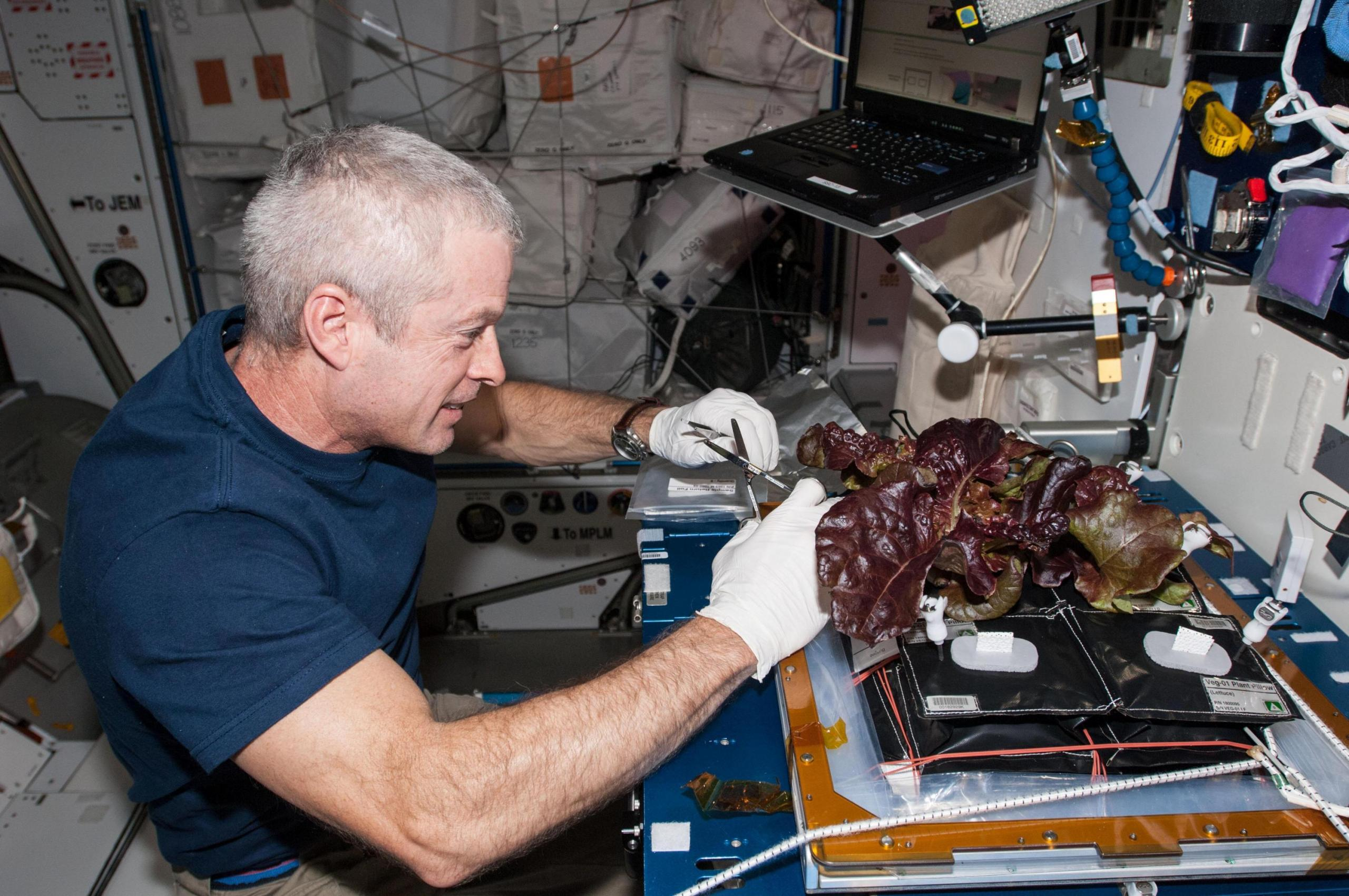 Man in space conducting experiment on plant using test equipment.