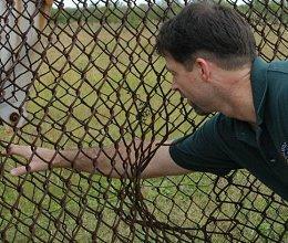 fence1_med2.jpg
