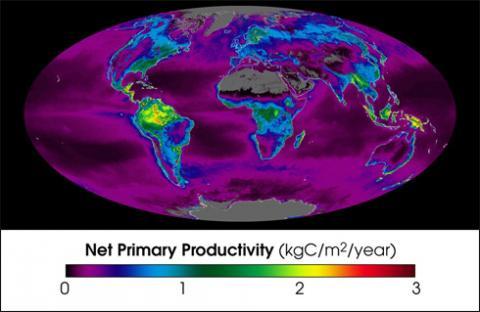 Net Primary Productivity