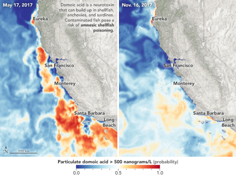 Satellite data visualization of domoic acid in the Pacific Ocean