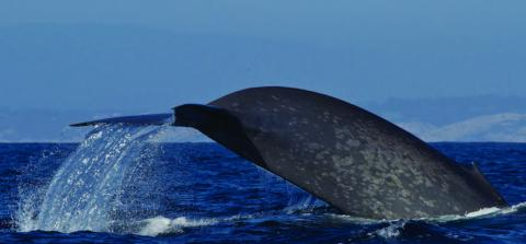 Photo of Whale Tail