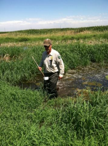 Man sampling mosquito breeding activity in a swamp