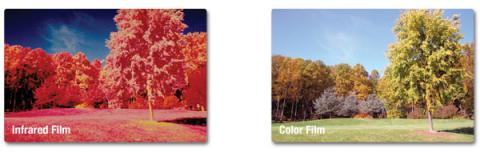 Two photographs of a park with grass and trees. The color film photograph shows the trees as green, like how our eyes perceive green leaves. The same trees appear in various shades of red in the Color Infrared photograph.