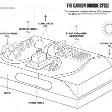 The Carbon Cycle coloring page