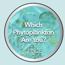 Phytoplankton Quiz