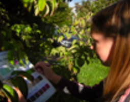Two Years* of the Trees Around the GLOBE Student Research Campaign