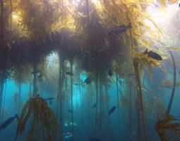 Underwater photograph of kelp seaweed and fish.