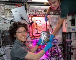 Mizuna mustard greens aboard ISS
