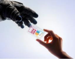 Photograph of a hand holding a colorized chip being handed to a gloved hand.